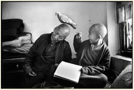 M F Monaci buddisti